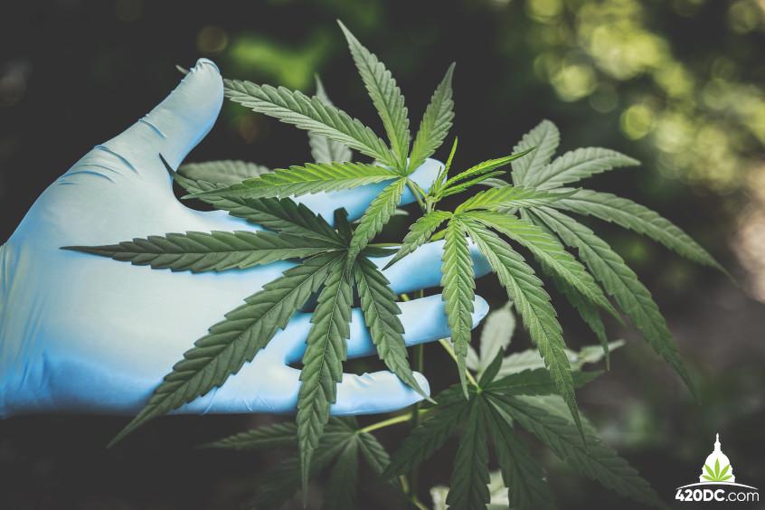 Medical Cannabis Virginia