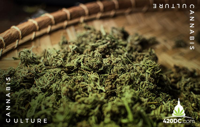 Virginia Cannabis, Marijuana, Virgiania