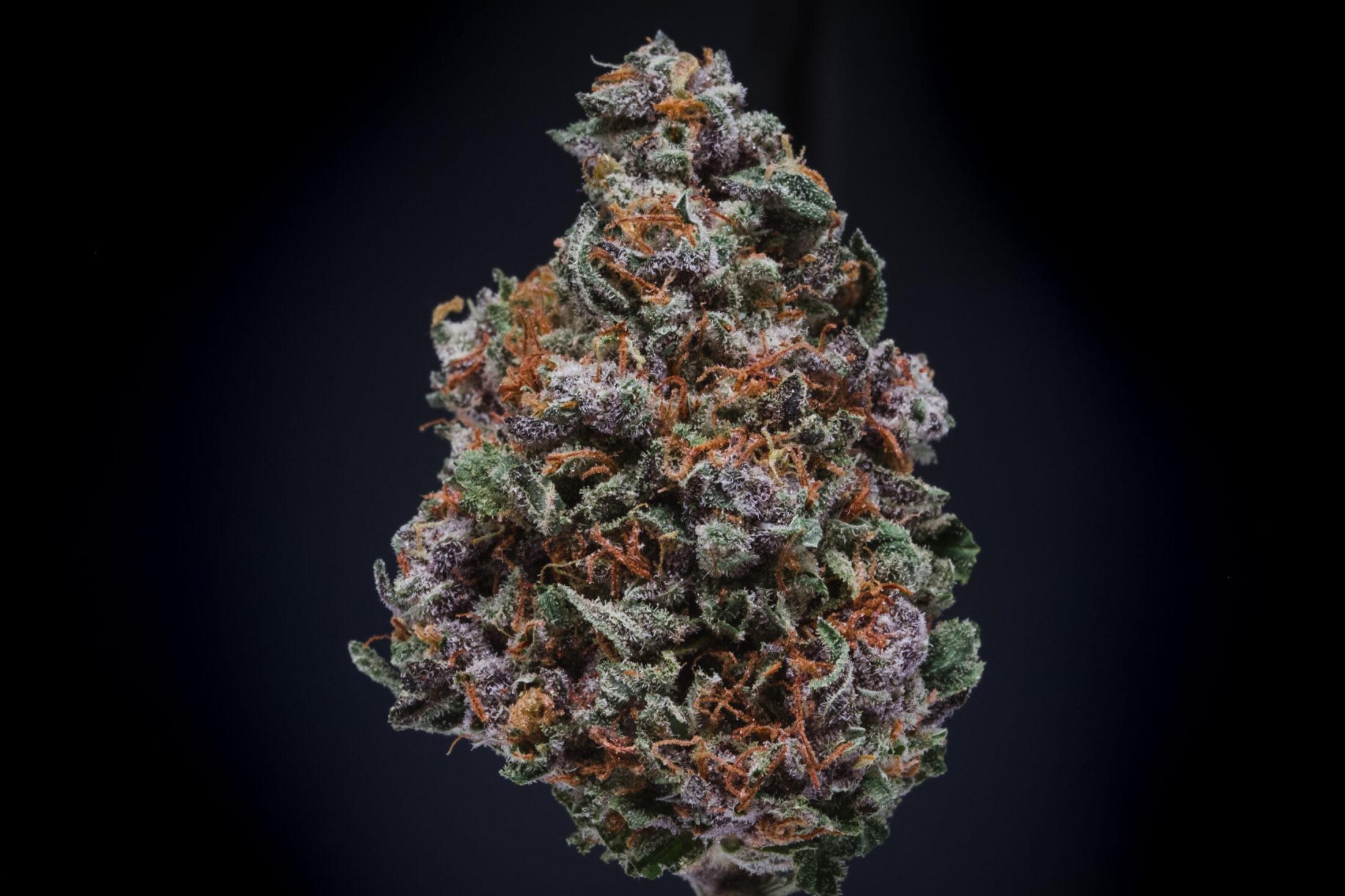 Purple Diesel Cannabis Flower