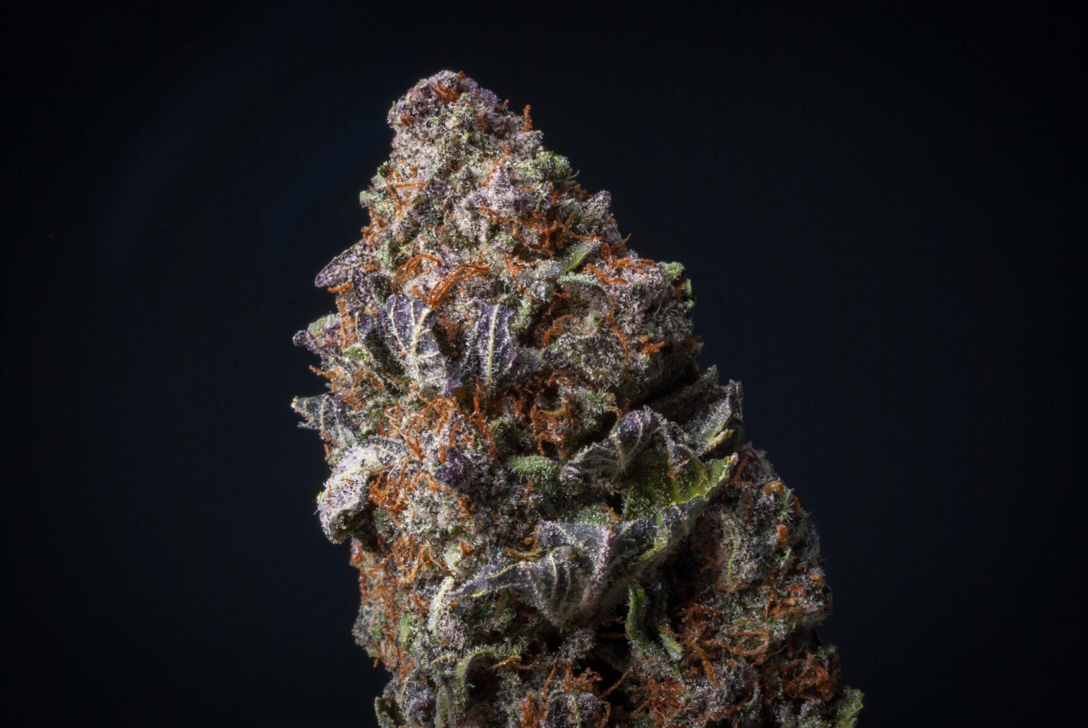 Zookies Marijuana Strain