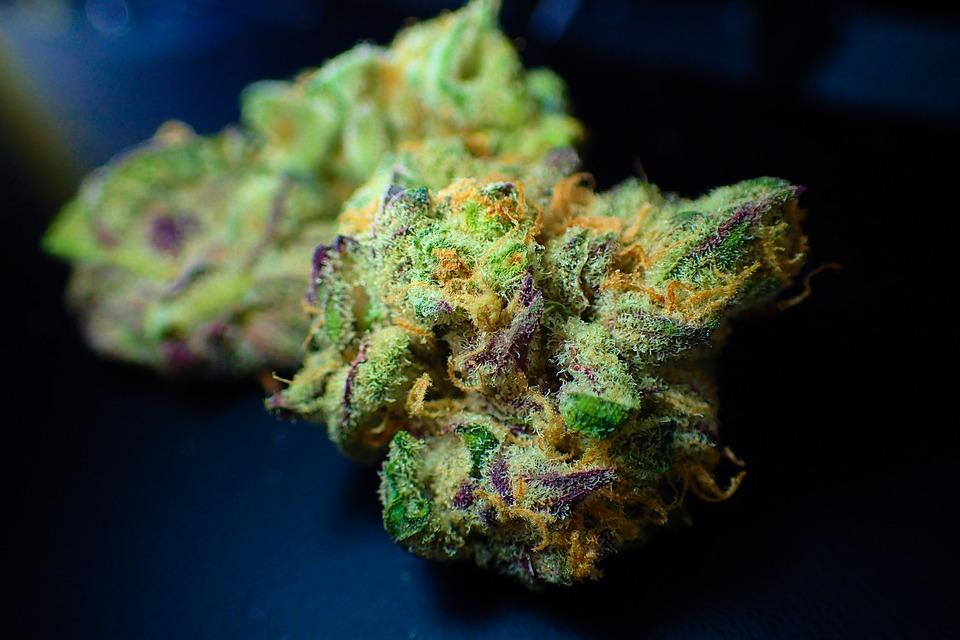Cannabis Program Dispensaries