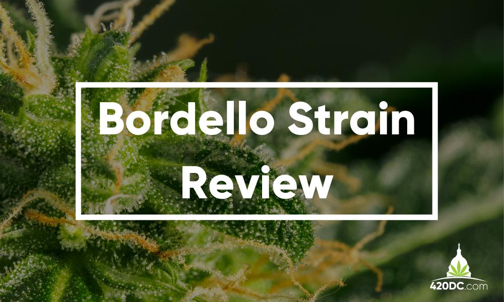 Bordello Strain