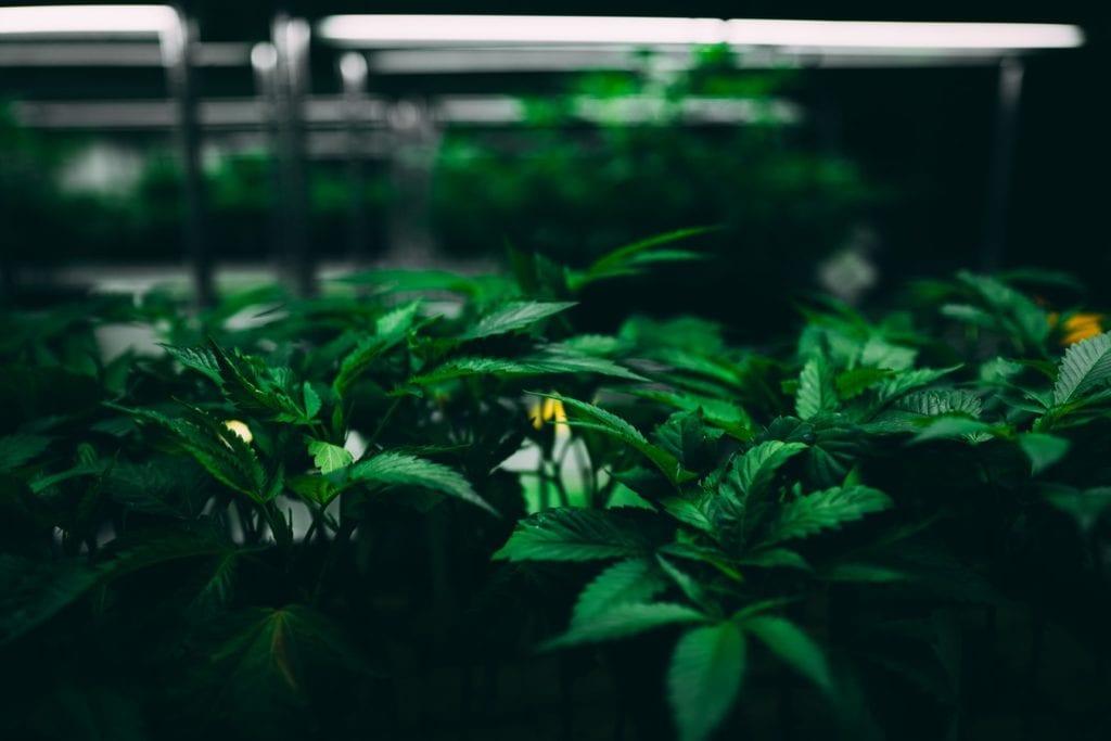 NJ Push for Legalization