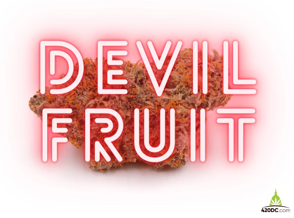Devil Fruit strain