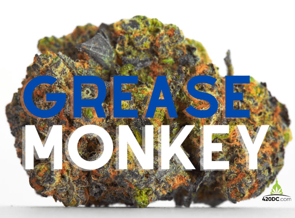 grease monkey strain