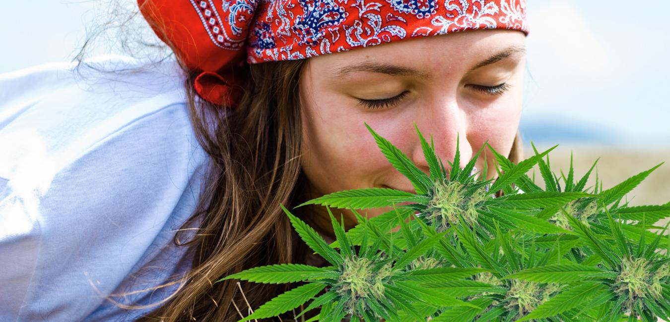 How does marijuana smell? 420DC.com