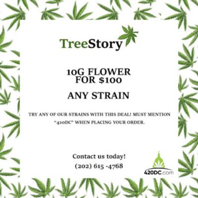 TreeStory 2