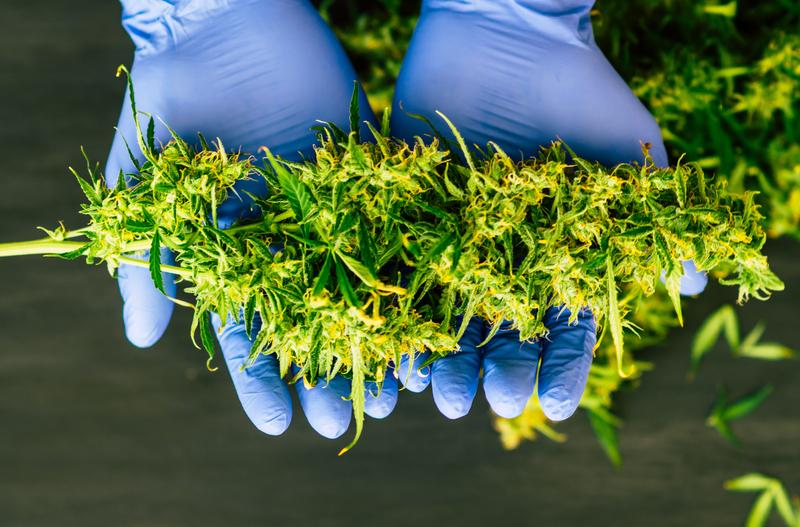 legal weed Illinois