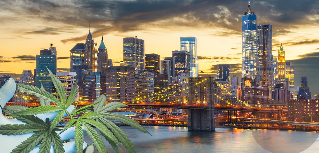 5 Best Dispensaries in New York 2020