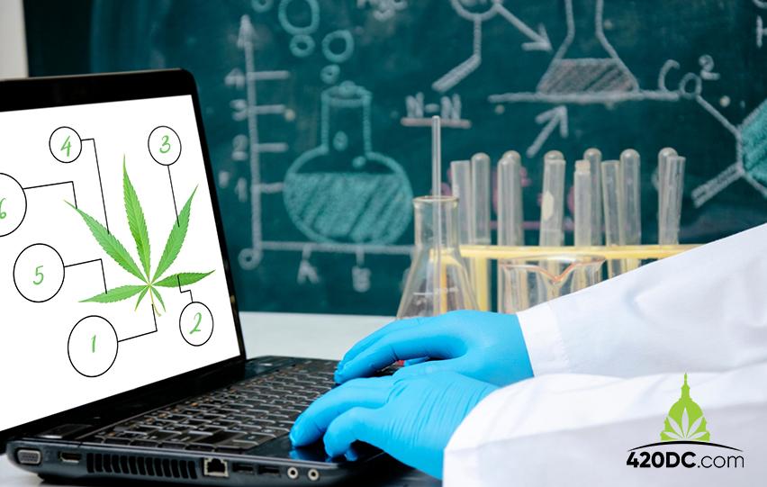 DEA Hurdles Scientific Studies on Marijuana