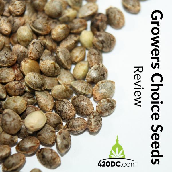 Growers Choice Seeds Review | 420DC.com
