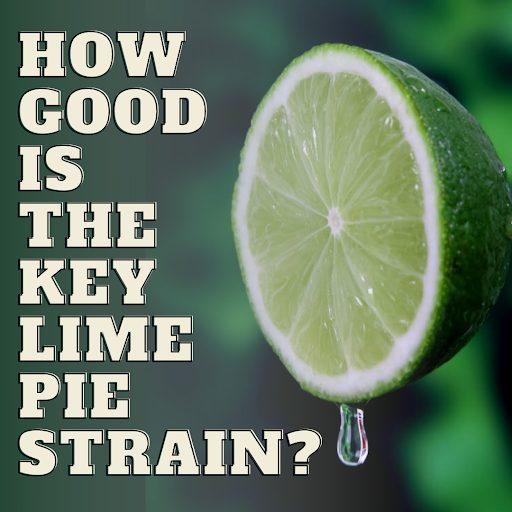 Key Lime Pie Strain