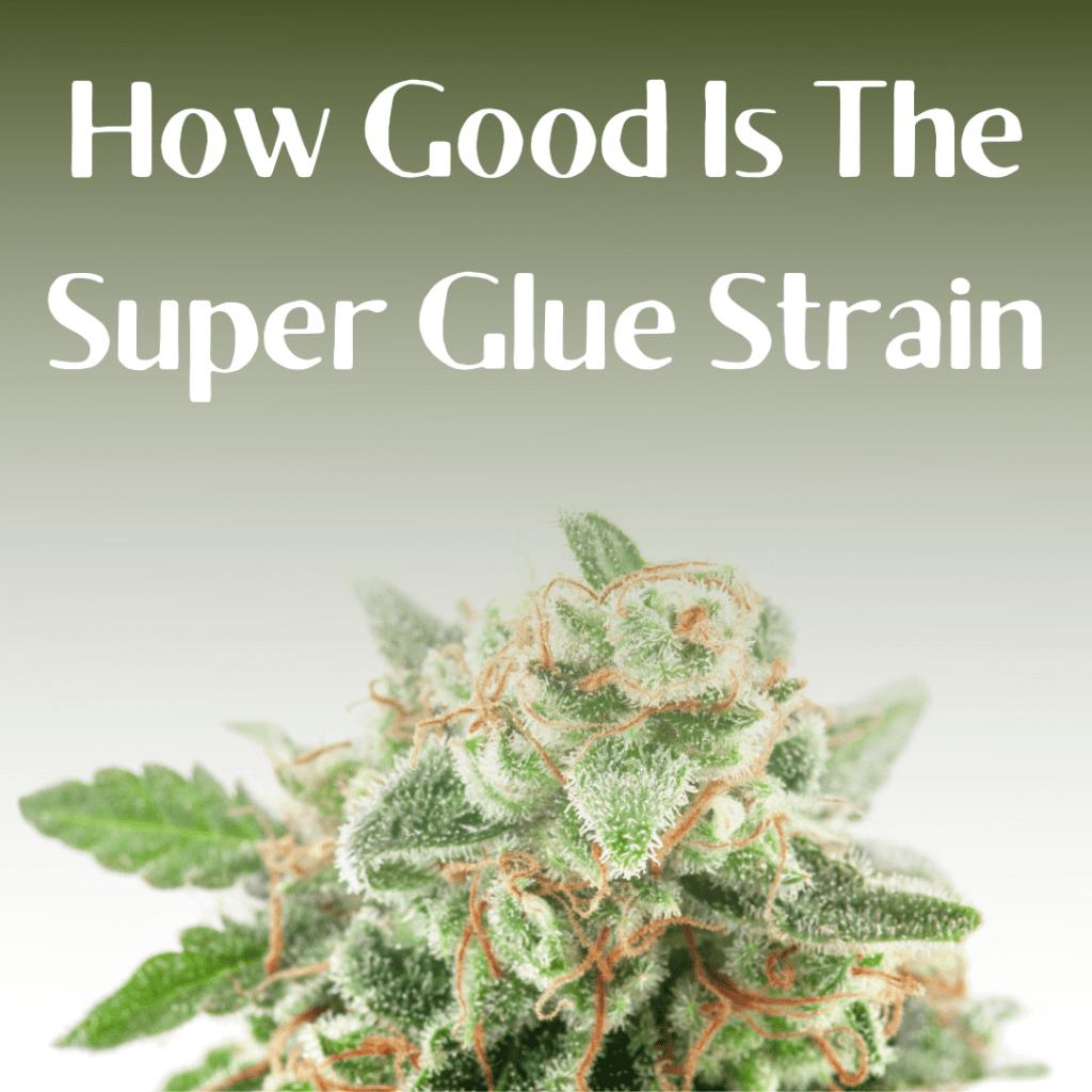 Super Glue Strain
