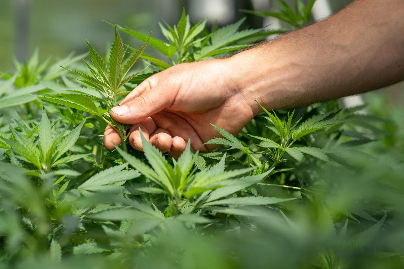 Marijuana Reform Bill