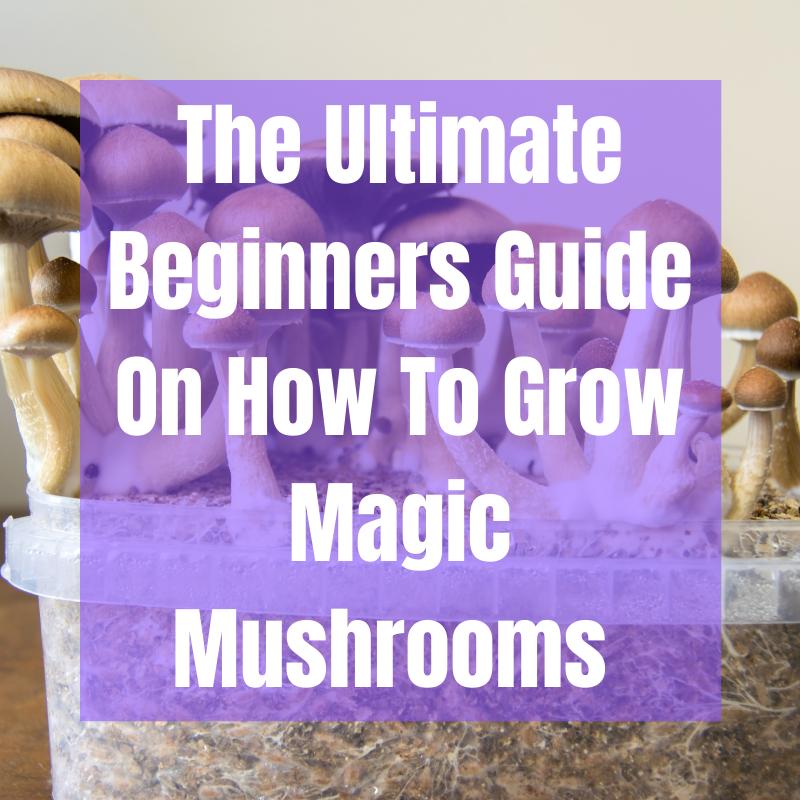 how to grow magic mushrooms