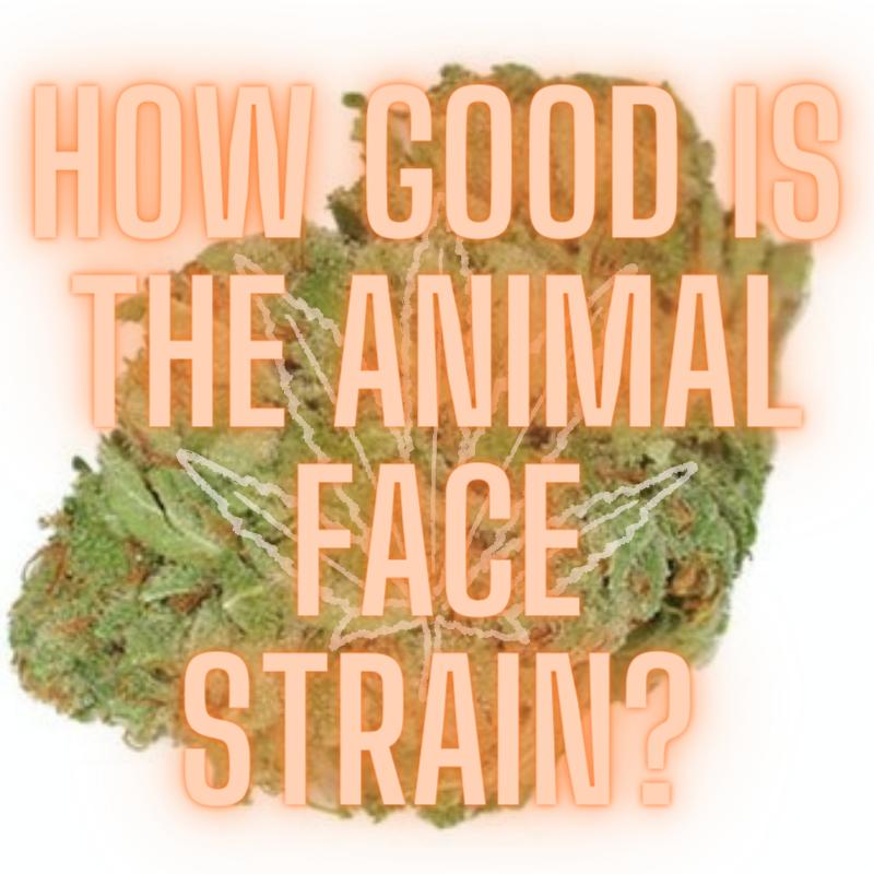 animal face strain