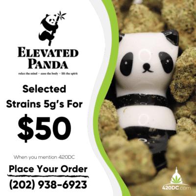 Elevated Panda 9