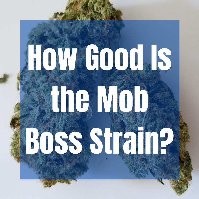mob boss strain