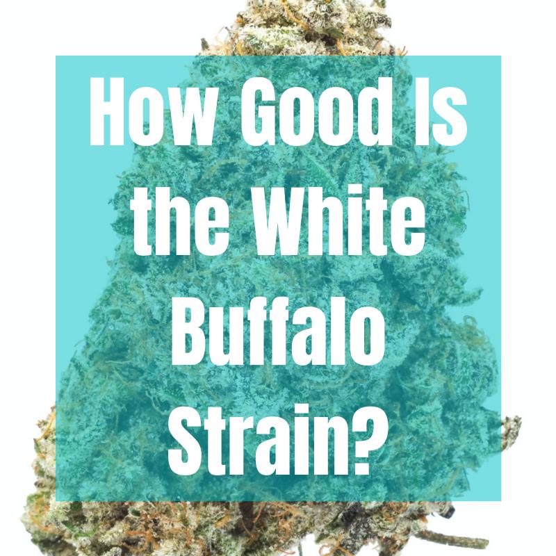 white buffalo strain