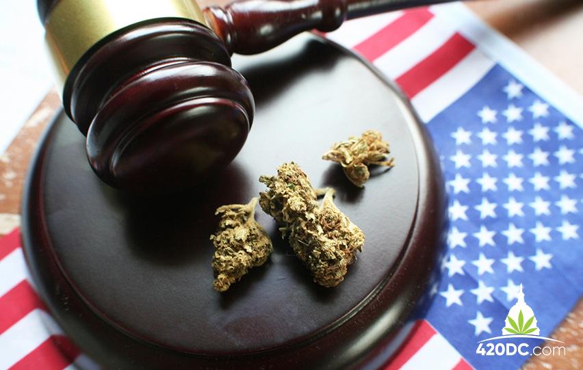 Marijuana's Momentum