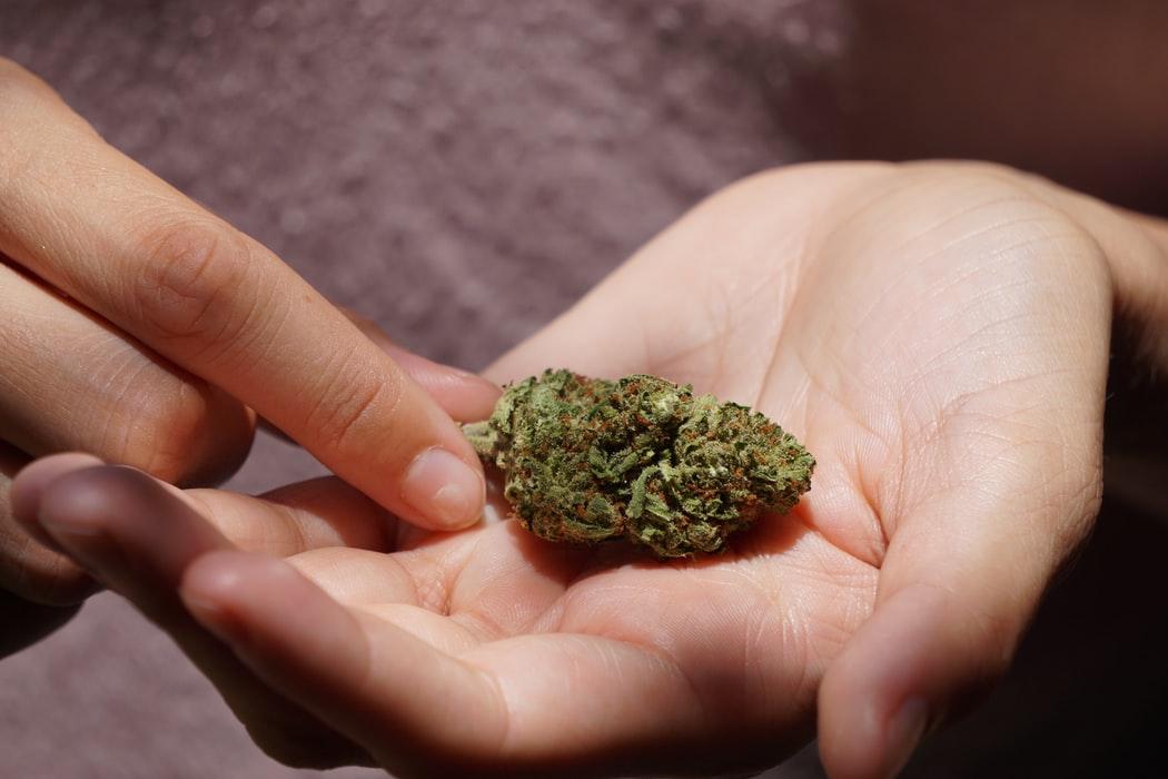Holyoke City a Cannabis Industry Hub