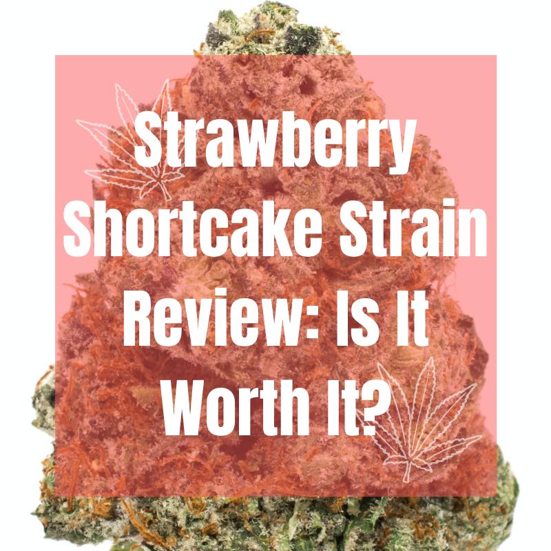 strawberry shortcake strain