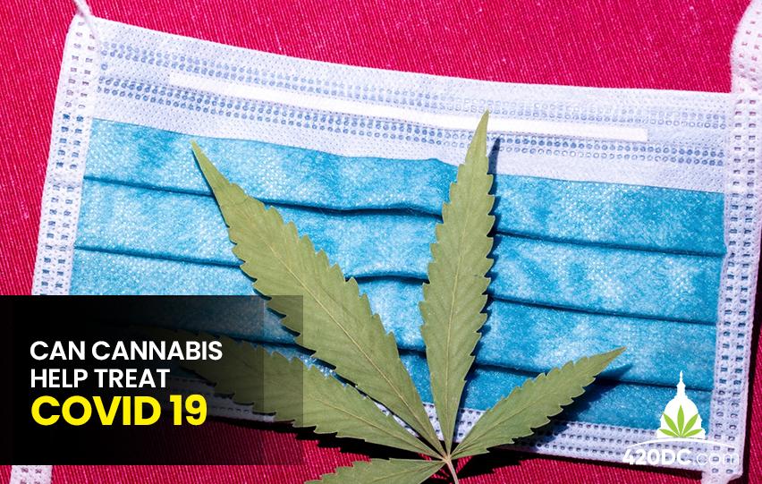 cannabis help treat COVID-19