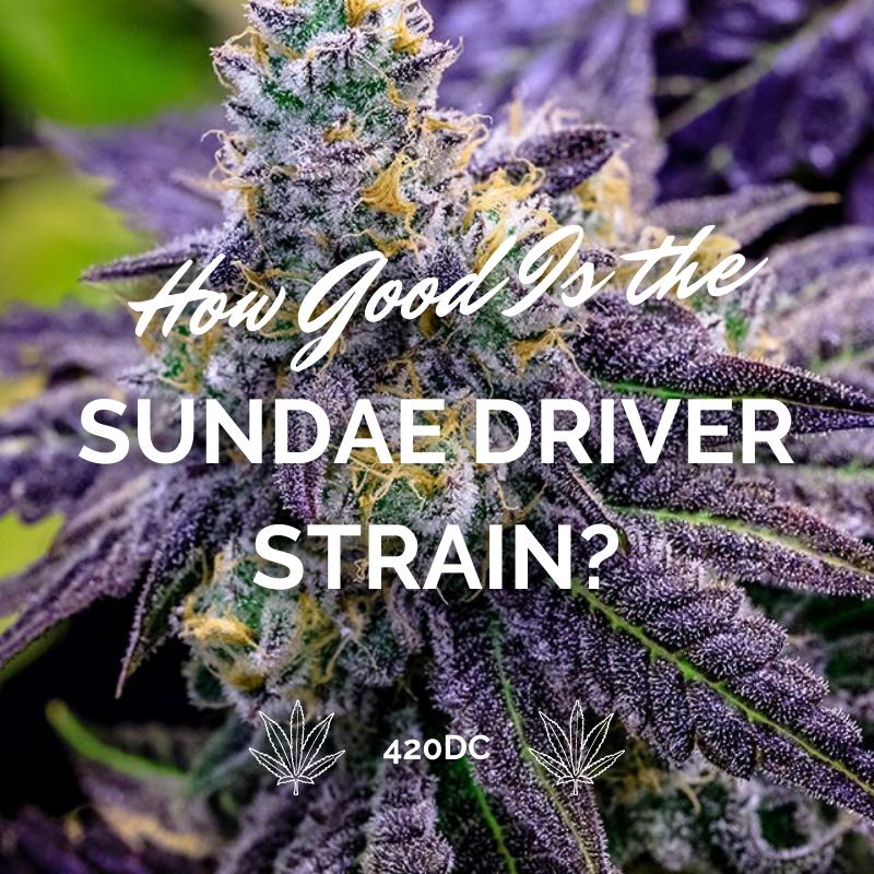sundae driver strain