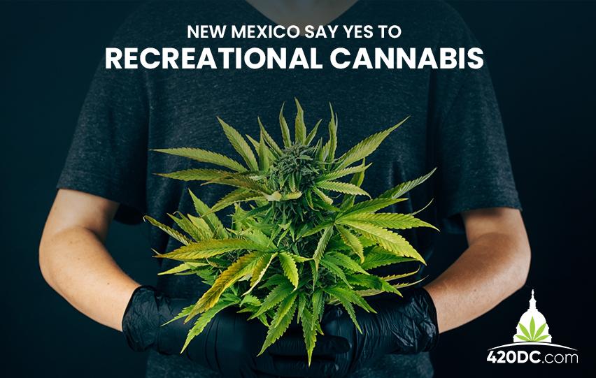 New Mexico Recreational Cannabis