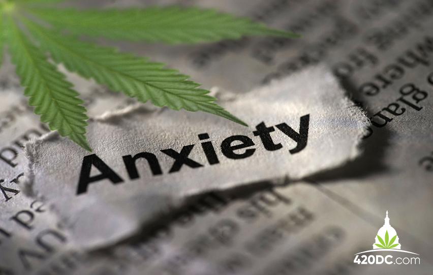 Cannabis Strains for Social Anxiety