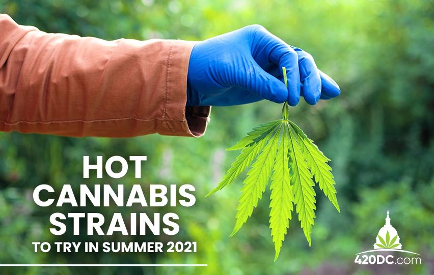 Cannabis Strains Summer 2021
