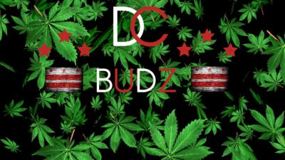 DCBUDZ 9
