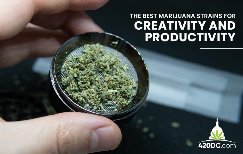 best marijuana strains for creativity and productivity