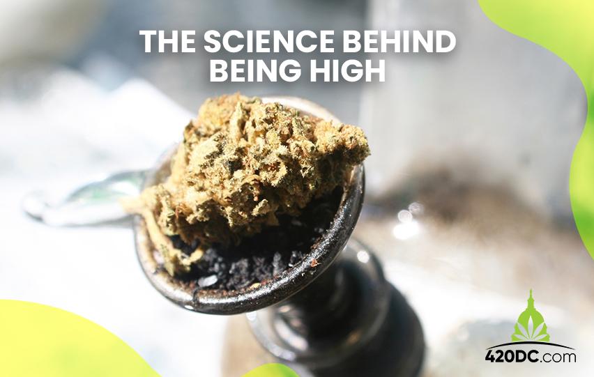 Science Behind Being High