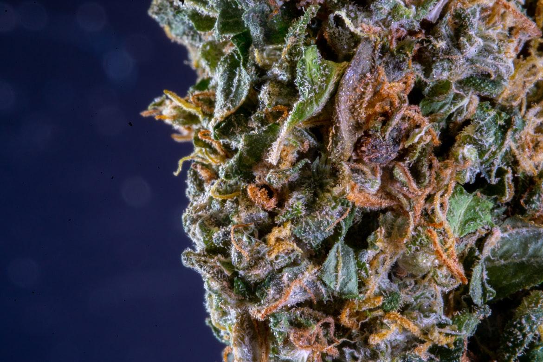 Cannabis ADHD