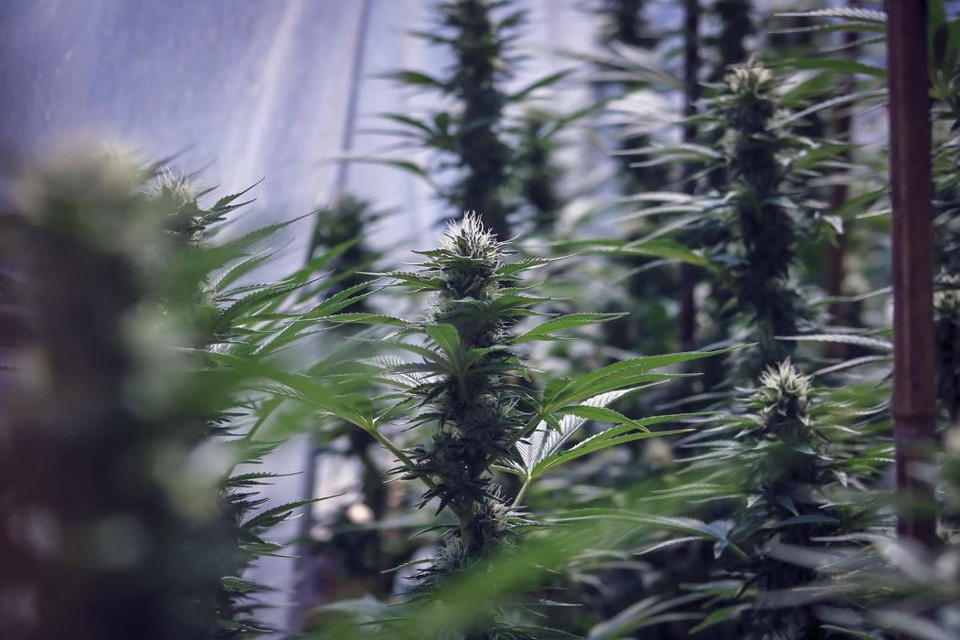 Maryland Jumpstarts Its Cannabis Legalization