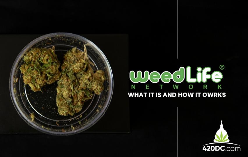 Weedlife Network