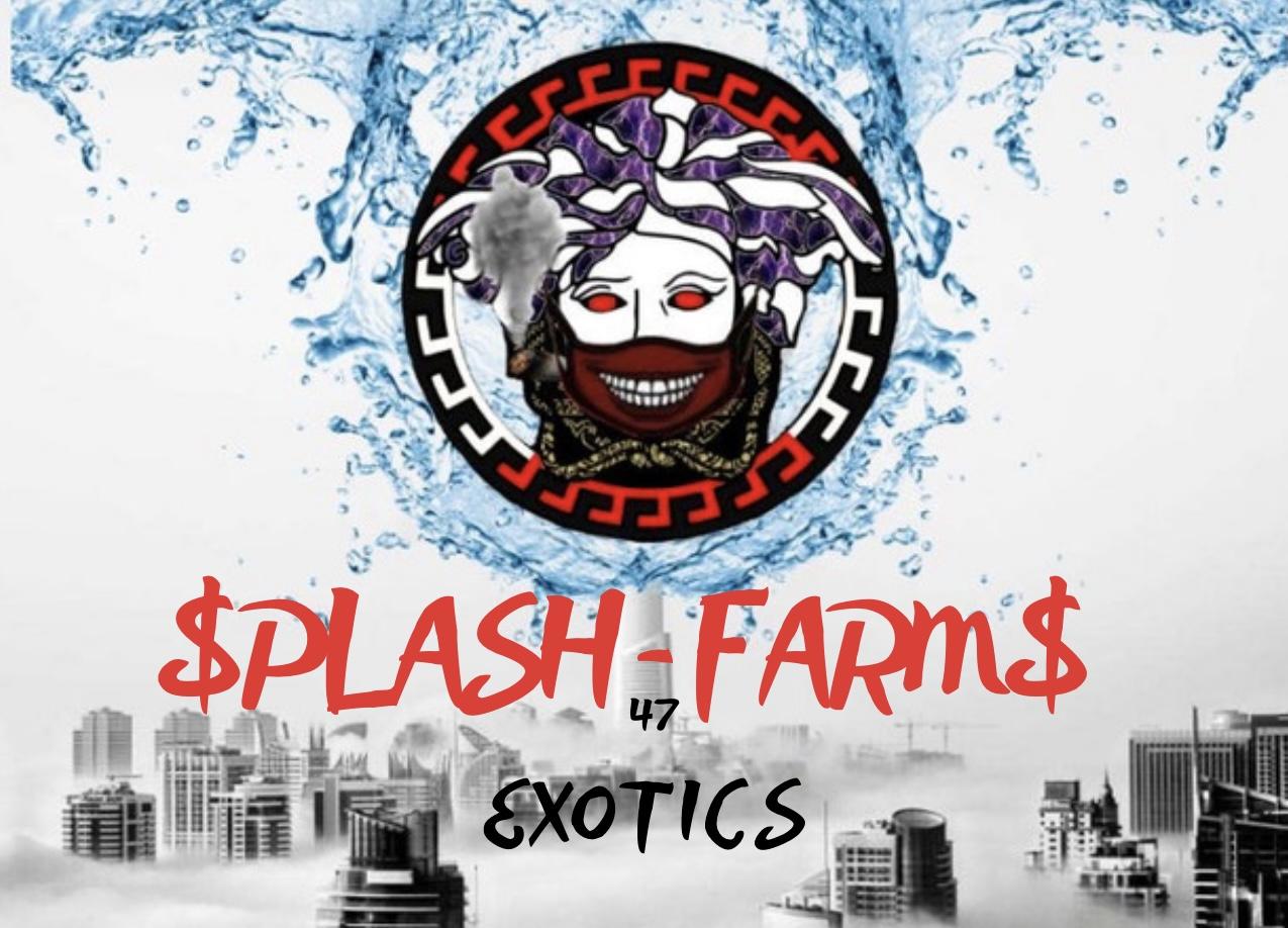 splash farms